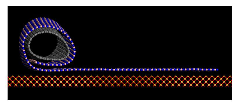 Stability and Dynamics of Boron Nitride Nanoscrolls