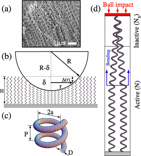 Entanglement and the nonlinear elastic behavior of forests of coiled carbon nanotubes