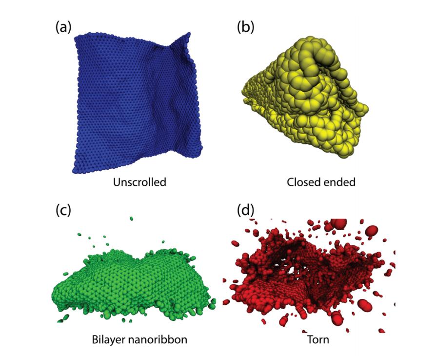 Carbon Nanoscrolls at High Impacts: A Molecular Dynamics Investigation